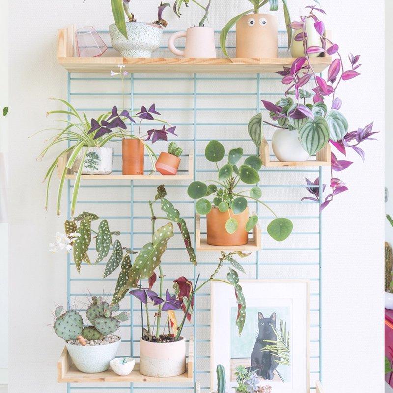 Wandrek Tolhuijs Circulair met plankjes en planten
