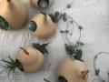 Plantenhanger calabash