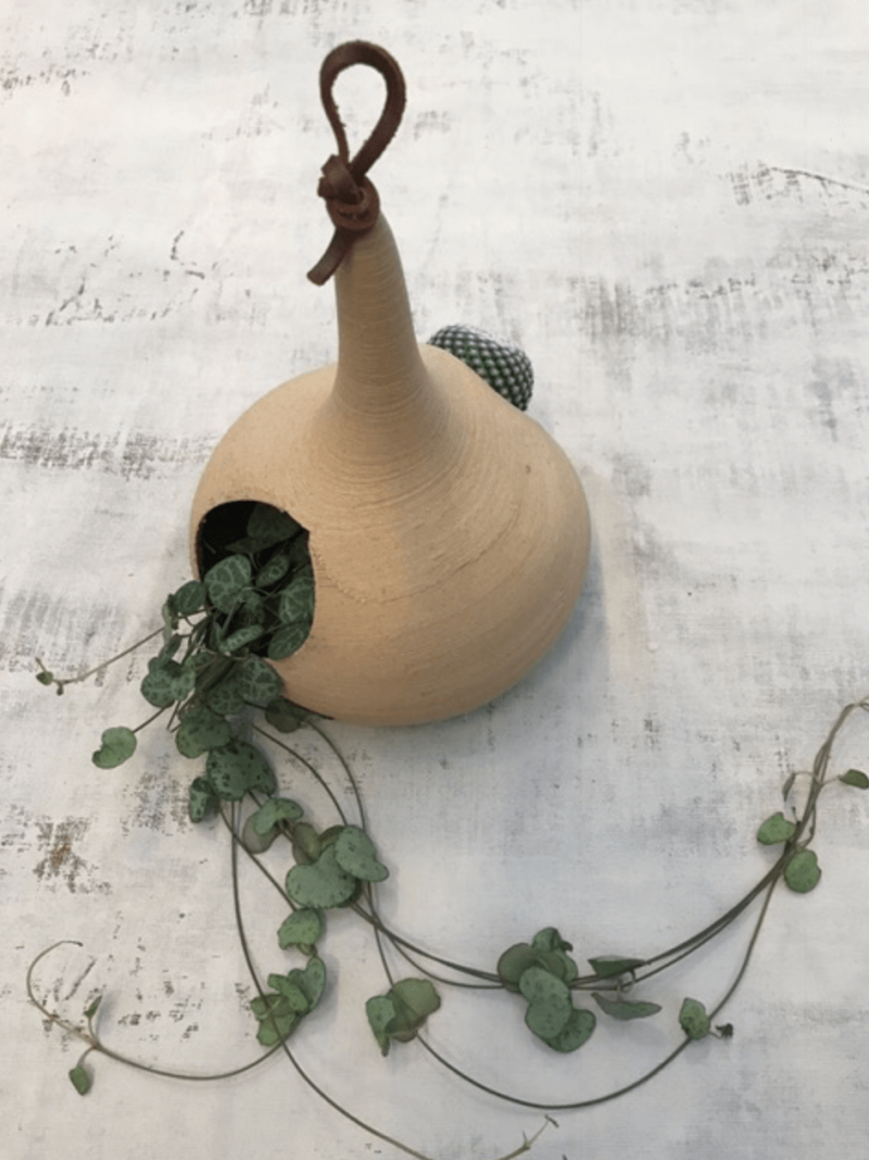 Plantenhanger calabash rescued